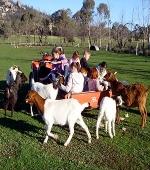 Kids Help Feeding The Animals