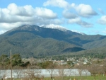 bogong moth views