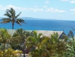 pandanus palms view