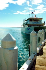 Nearby Huskisson Whale and Dolphin Cruises