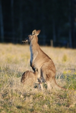 105 hectares of bushwalks and adjoing Jervis Bay National Park