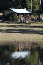 kangaroo paw cottage