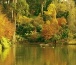 Nearby National Rhodedendron Gardens Lake(900 Metres from Loft)