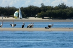 Feed the pelicans and enjoy the beautiful broadwater