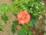 amber lodge garden