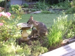 Wallaby and Joey in the garden