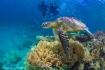 Diving with the Turtles