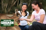 Currumbin Wildlife Sanctuary 10 minutes away