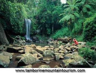 Tamborine Mountain Accommodation And Hotels