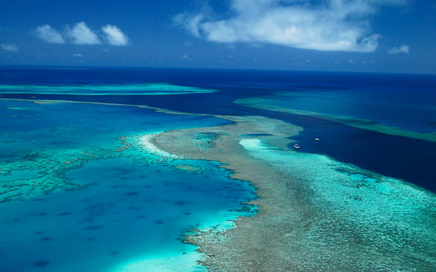 coral reef and australia Australia's great barrier reef is one of the world's seven natural wonders, it is a prized world heritage area, the largest reef system and the biggest living structure on the planet.